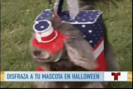 La nuevas tendencias de disfraces para tus mascotas en noche de brujas