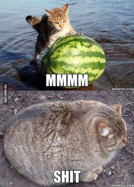 Un Gatito Con Mucha Hambre #LaImagenDelDia