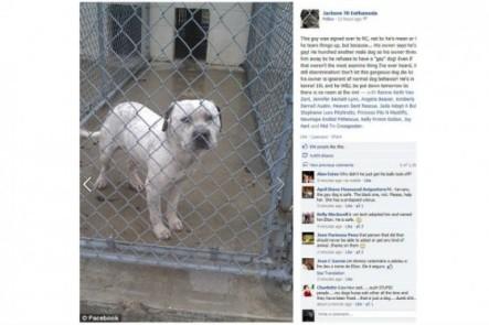 Un pitbull iba a ser sacrificado porque su dueño pensaba que era gay