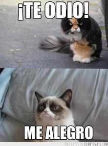 CG_15135_grumpy_cat_y_sus_amigos