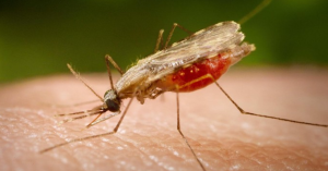 Al menos 36 personas han muerto por dengue y cólera en lo que va de año
