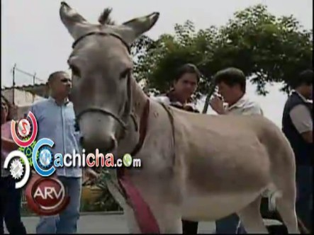 El Burro Candidato @DonBurroReal #Vídeo