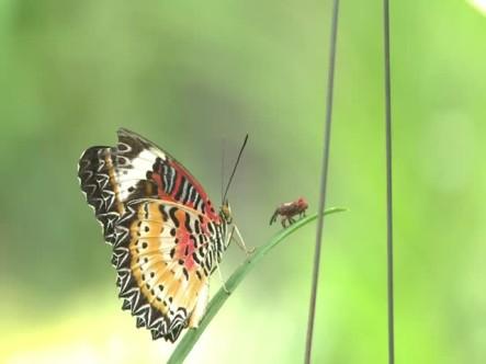 Puedes Ganar Dinero Por Cuidar De Las Mariposas En Camboya #Video