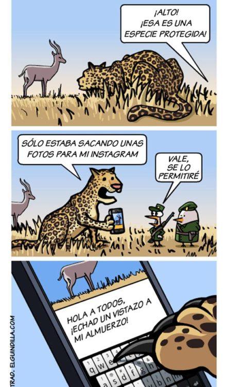 Instagram para animales #LaImagenDelDia