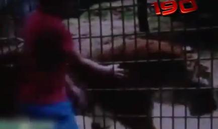 Niño Pierde El Brazo Tras Ser Atacado Por Un Tigre En Zoológico De Brasil #Video