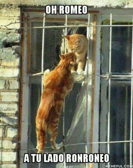 ¡Oh el ronroneo de Romeo! xD #LaImagenDelDia