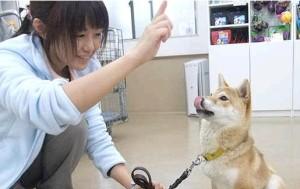 Tokio Perro