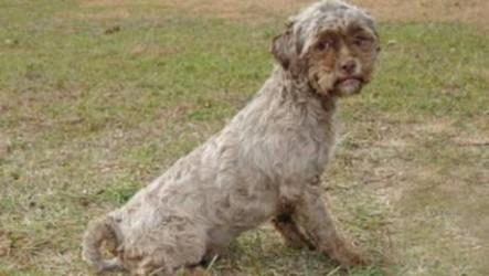 """Perro con cara """"humana"""" busca nuevo hogar tras salvar de la muerte"""