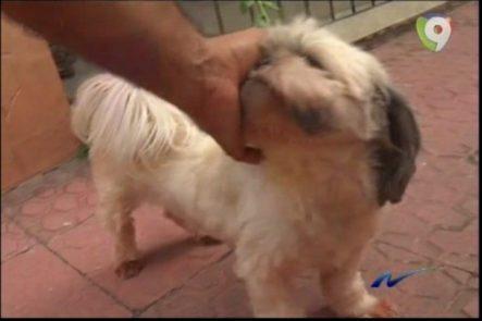 Nuria Piera: Descubrimos Red De Falsos Veterinarios Que Se Dedicaban A Medicar Y Robar Mascotas