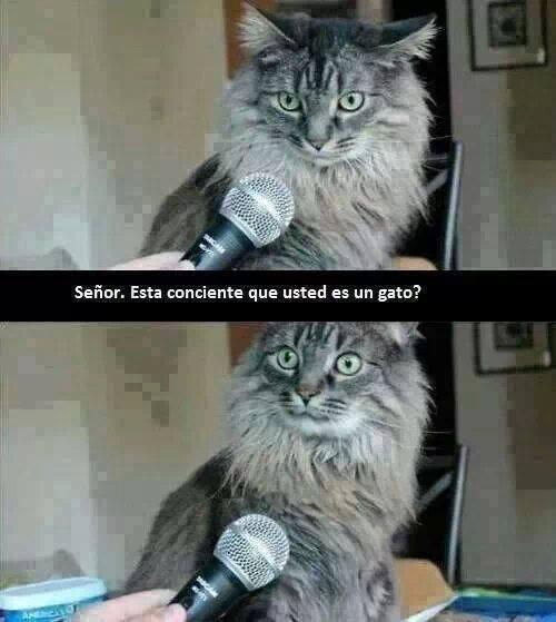 disculpe-señor-esta-consciente-de-que-es-usted-un-gato-que