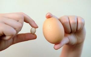 el huevo más