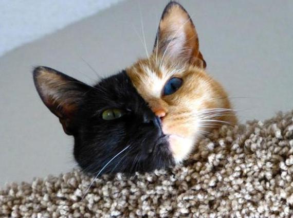 gato dos caras 2