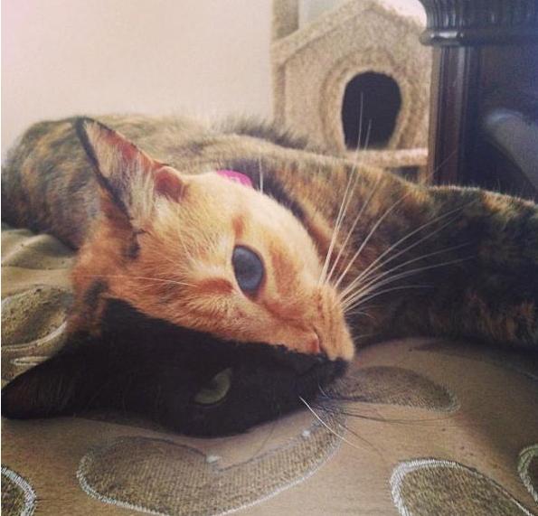 gato dos caras 3