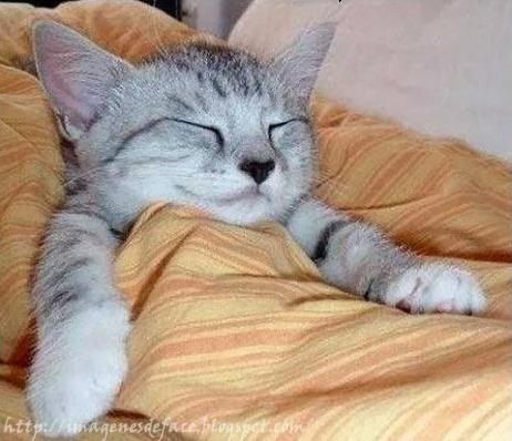 gatos-graciosos.para-facebook