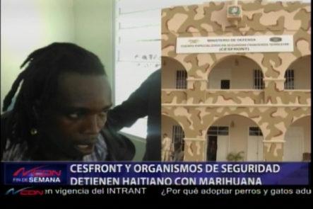 CESFRONT Y Organismo De Seguridad Detienen Haitiano Con Marihuana
