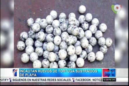 Ministerio de Medio Ambiente y Recursos Naturales recuperan 89 huevos de tortugas marinas que fueron sustraidos de una playa