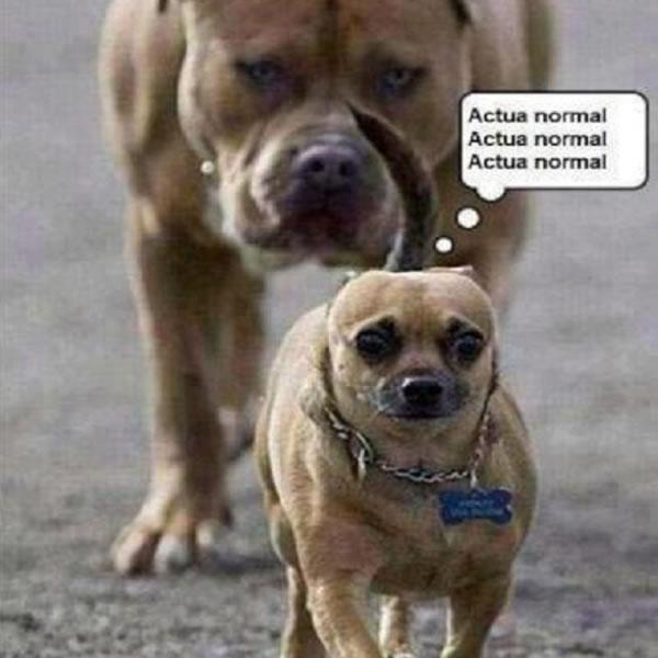 imagen-graciosa-de-perro-asustado