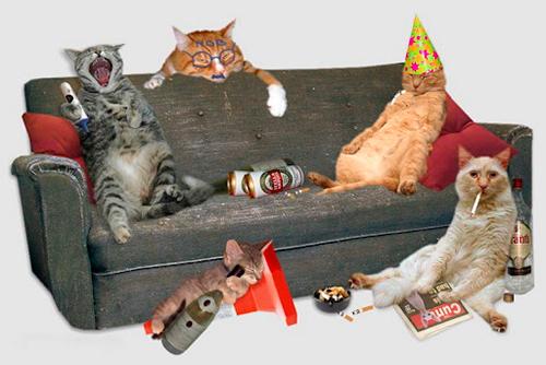 imagenes-graciosas-animales-fiesta-gatuna