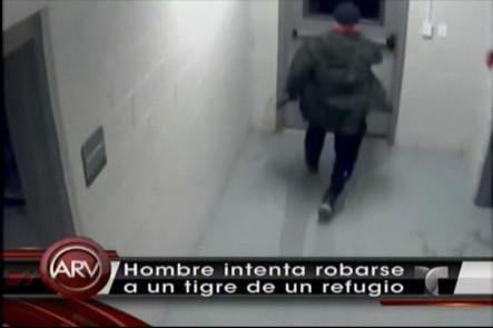 Un Hombre Intentó Robarse Un Tigere De La Jaula De Un Refugio