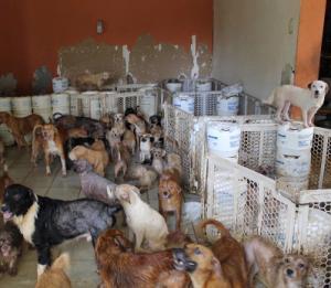muchos perros