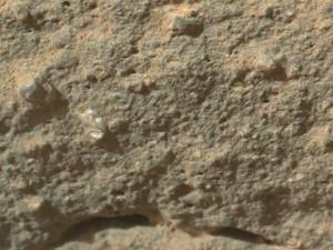 Aunque la NASA aún no confirmó que se trata de una planta, ya descartó que sea un escombro de roca debido a que parece estar creciendo en la superficie del planeta.
