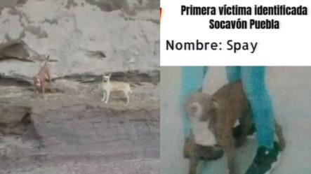 """Perros Siguen Atrapados En El Socavón Porque """"no Arriesgaran La Vida Humana Por La De Un Animal"""""""