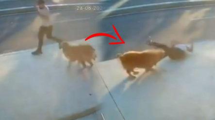 Hombre Va Caminando Por La Calle Y Lo Ataca Un Perro ¡no Creerás Lo Que Le Pasó!