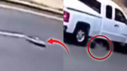 Camioneta Choca A Hombre Que Iba A Salir De Una Alcantarilla En California