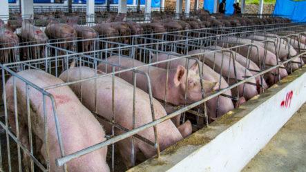 EE.UU. Confirma La Existencia De Peste Porcina Africana En RD