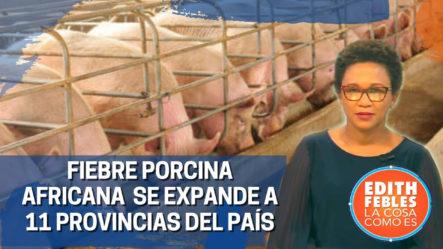 Fiebre Porcina Africana Se Expande A 11 Provincias Del País