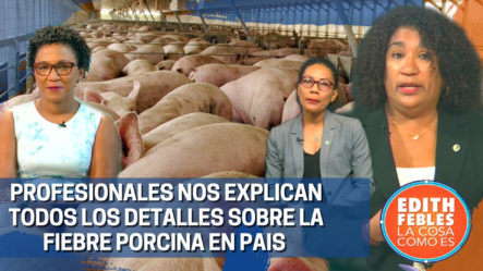 Profesionales Nos Explican Todos Los Detalles Sobre La Fiebre Porcina En El País