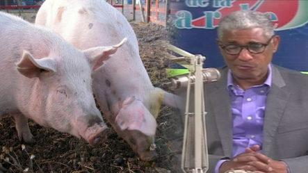 Johnny Vásquez Revela Qué Deben Hacer Para Asegurar El País De La Peste Porcina Africana