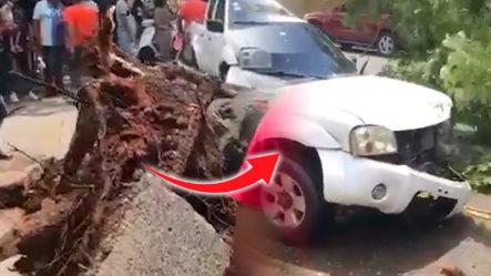 Accidente Registrado En La Av. La Influencia Tras Caerse Un árbol E Impactar Con Camioneta