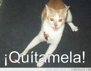 quitamela_cucharacha