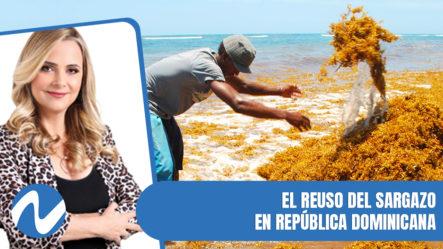 El Reuso Del Sargazo En República Dominicana | Nuria Piera