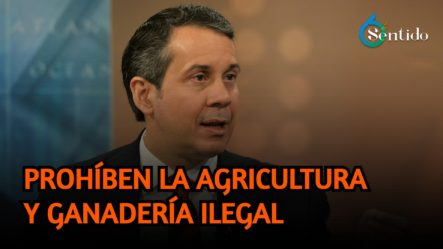 Medio Ambiente Prohíbe La Agricultura Y Ganadería Ilegal En Todo Valle Nuevo | 6to Sentido