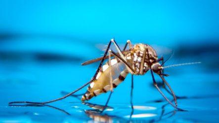 Hallazgo En RD De Especie De Mosquito Transmisor De Diversos Virus