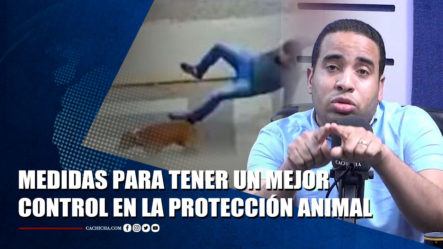 Sandy Saviñon Sobre La Debilidad De La Protección De Los Animales En RD | Tu Tarde By Cachicha