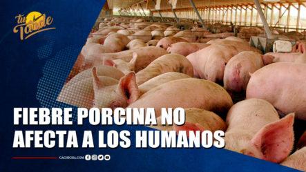 Fiebre Porcina No Afecta A Los Humanos; El Consumo De Carne De Cerdo Es Seguro   Tu Tarde By Cachicha