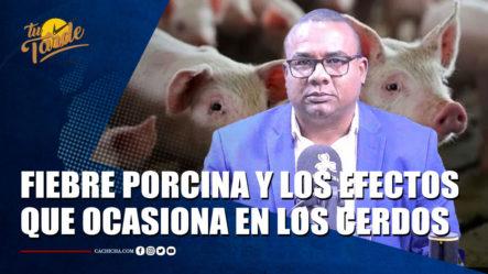 Gabriel Sánchez Comenta Sobre La Fiebre Porcina Africana Y Los Efectos Que Ocasiona En Los Cerdos – Tu Tarde By Cachicha