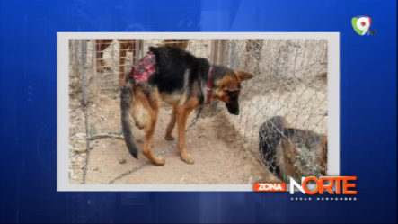 Cris Paulino: Ley De Protección Animal Y Tenencia Responsable