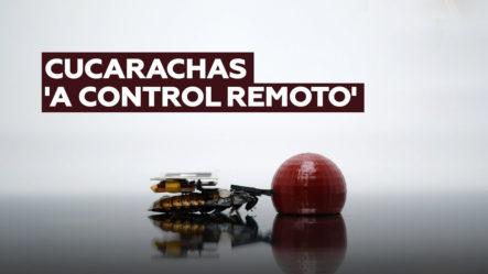 El Novedoso Invento Que Permite Controlar A Las Cucarachas
