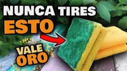 NUNCA MÁS LAS TIRES!! Esponjas Usadas VALEN ORO PURO En Tus PLANTAS En CASA   Huerto Urbano Y Jardín