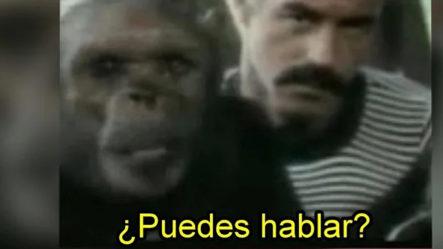 Extraña Criatura Mitad Humano Y Chimpancé Es Captada En Imágenes; La Historia De Oliver