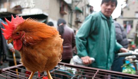 China Registra El Primer Caso Mundial De Gripe Aviar H10N3 En Humanos