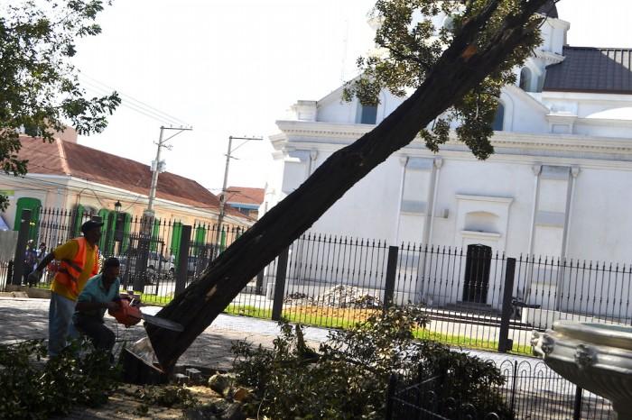 Alcaldía De Santiago Pidió Permiso Para Cortar Once árboles Y Eliminó Treinta Y Cinco