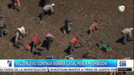 Persiste La Siembra Ilegal En La Parte Sur De Valle Nuevo Pese A Resolución Que Lo Prohíbe